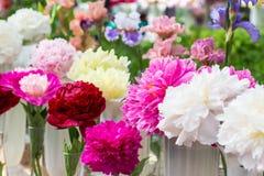 härlig blommapion arkivfoton
