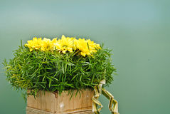 härlig blommapresentation royaltyfri fotografi