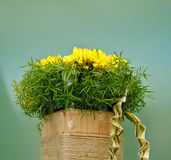härlig blommapresentation royaltyfria bilder