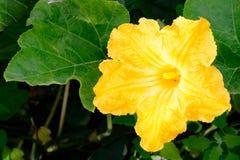 Härlig blommapumpa Arkivfoton