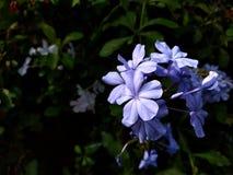härlig blommapurple Royaltyfri Foto