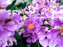 härlig blommapurple Arkivfoton