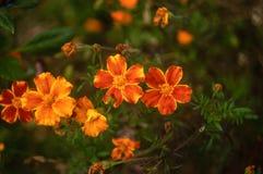 Härlig blommaringblommanärbild på grön naturlig bakgrund royaltyfria bilder