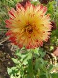 härlig blommasommar Arkivbild