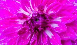 Härlig blommatextur Arkivbilder