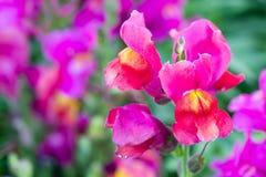 härlig blommaträdgård Royaltyfri Fotografi