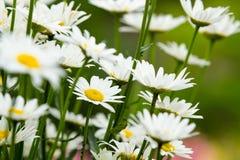 härlig blommaträdgård Royaltyfria Foton