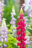härlig blommaträdgård Arkivbild