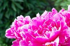 härlig blommaträdgård Arkivfoto