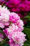 härlig blommaträdgård Royaltyfri Bild