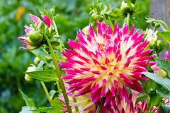 härlig blommaträdgård Arkivfoton