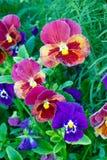 härlig blommaträdgård Royaltyfria Bilder