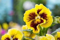 härlig blommaträdgård Arkivbilder