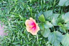 härlig blommaträdgård Royaltyfri Foto