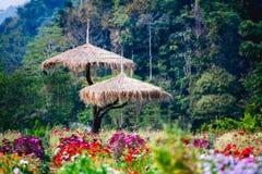 Härlig blommaträdgård på doiangkhangberget, Chiang Mai, T Arkivfoto