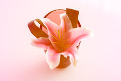 härlig blommavase Arkivbilder