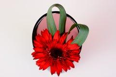 härlig blommavase Arkivfoton