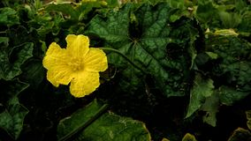 härlig blommayellow Arkivbild