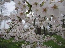 härlig blomning Arkivfoto