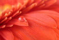 härlig blomning Royaltyfria Bilder