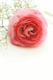 Härlig blomning Arkivbild