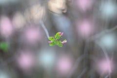 Härlig blomning för äppleträd Arkivfoto