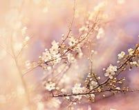 Härlig blomningfilial Royaltyfria Bilder