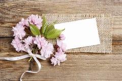 Härlig blomningmandel (prunustriloba) på träbakgrund Fotografering för Bildbyråer