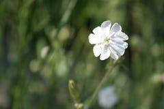 härlig blomningsommar Royaltyfri Fotografi