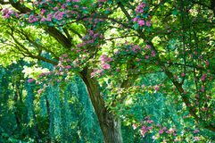 Blomningtree Royaltyfri Fotografi