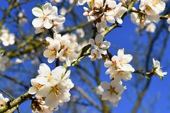 härlig blomningtree Naturplats med solen på solig dag just rained Abstrakt suddig bakgrund i vår Royaltyfria Foton