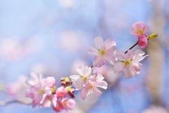 härlig blomningtree Naturplats med solen på solig dag just rained Abstrakt suddig bakgrund i vår Arkivfoton