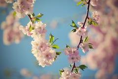härlig blomningtree Naturplats med solen på solig dag just rained Abstrakt suddig bakgrund i vår Royaltyfri Foto