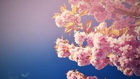 härlig blomningtree Naturplats med solen på solig dag just rained Abstrakt suddig bakgrund i vår Arkivbild