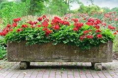 Härlig blomsterrabatt Arkivfoto
