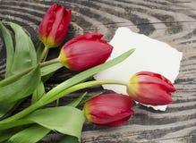 Härlig blomstra tulpanblomma med stället för text illustration för design för bakgrundbakgrundskort blom- mot bakgrund field blåa Arkivbild