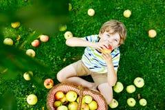 Härlig blond lycklig ungepojke som utomhus väljer och äter röda äpplen på den organiska lantgården, höst Rolig liten förträning royaltyfria foton