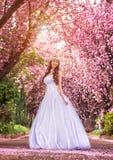 Härlig brud i en vit klänning under de sakura träd- och blommakronbladen Arkivfoto