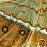Härlig brun bakgrund med delen för tre den förbluffa prickar av Cambo royaltyfri bild