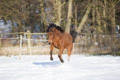 Härlig brun stospring i vinter Arkivfoto