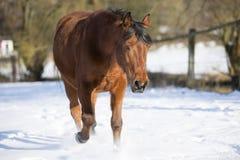 Härlig brun stospring i vinter Royaltyfri Foto
