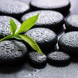 Härlig brunnsortbakgrund av grön filialbambu på zenbasaltst Fotografering för Bildbyråer