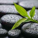Härlig brunnsortbakgrund för Closeup av grön filialbambu på zen b Royaltyfri Fotografi
