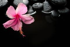 Härlig brunnsortinställning av blommande rosa hibiskus- och zenstenar Arkivbilder