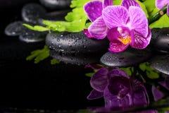 Härlig brunnsortinställning av den avrivna lila orkidén (phalaenopsis) Arkivfoton