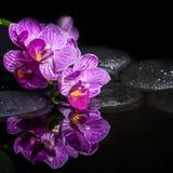 Härlig brunnsortinställning av den avrivna orkidén (phalaenopsis), zensto Arkivfoton