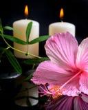 Härlig brunnsortinställning av den delikata rosa hibiskusen, grön ranka Royaltyfria Foton