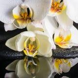 Härlig brunnsortinställning av den vita orkidén (phalaenopsis), grön kli Royaltyfri Bild