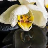 Härlig brunnsortinställning av den vita orkidén (phalaenopsis), zenstenar Arkivfoton