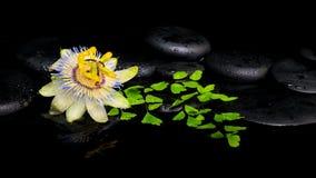härlig brunnsortinställning av passiflorablomman och den gröna filialormbunken Royaltyfri Fotografi